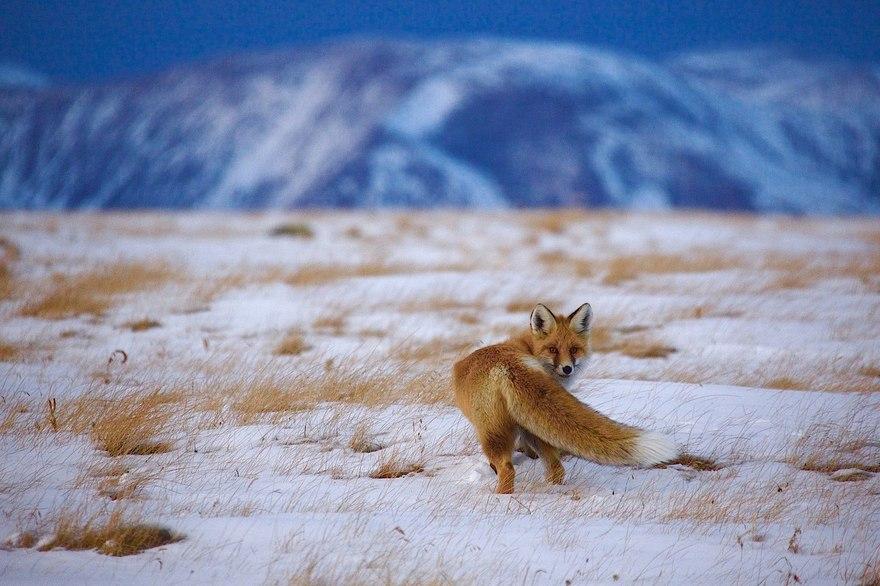 Выставка фотографий «Дикая природа России»