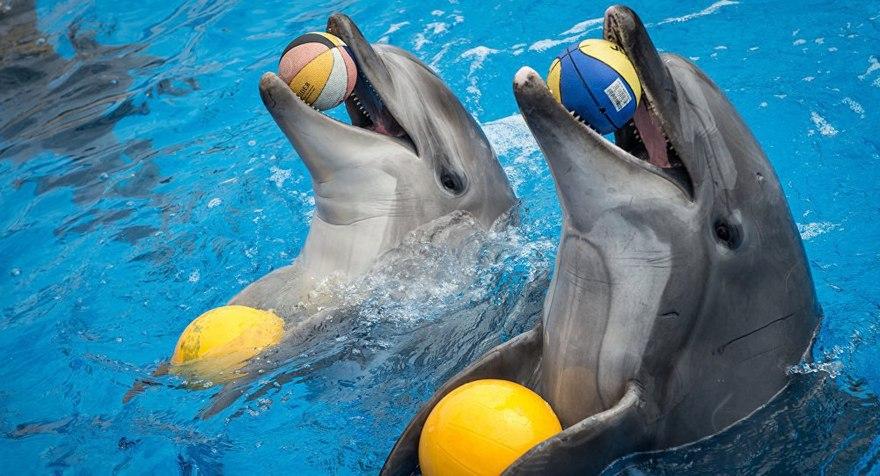 Шоу дельфинов в ТЦ «Рио»