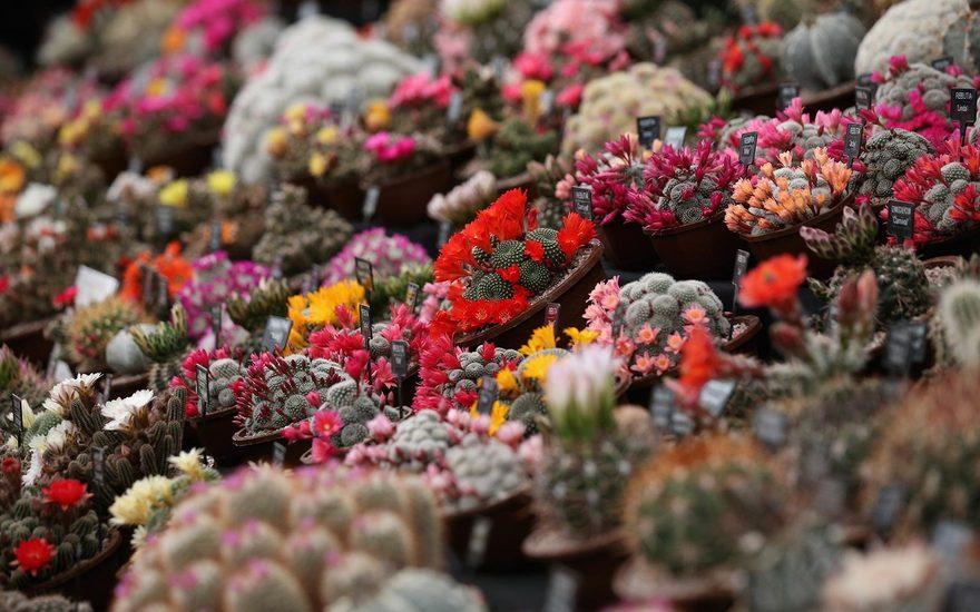Праздник цветов «Цветобум» в «Монрепо»