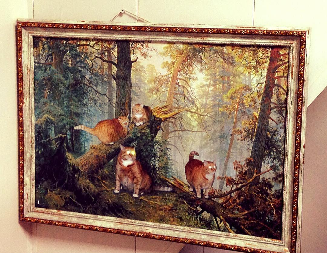 Музей кошки во Всеволожске