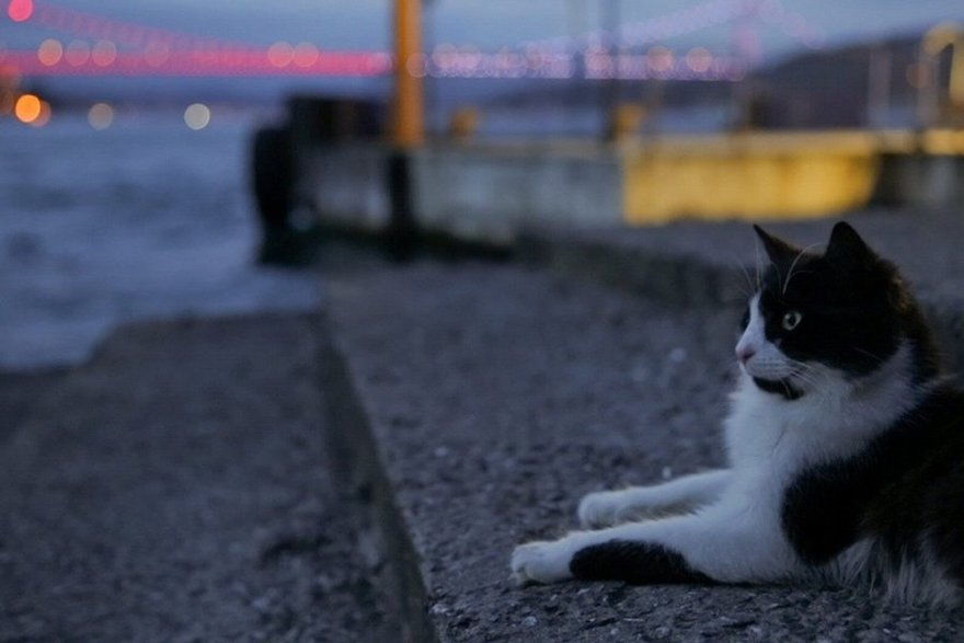 Показ фильма «Город кошек»